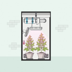 Quality Flat Design of medical cannabis growing indoor in growbox. Vector illustration